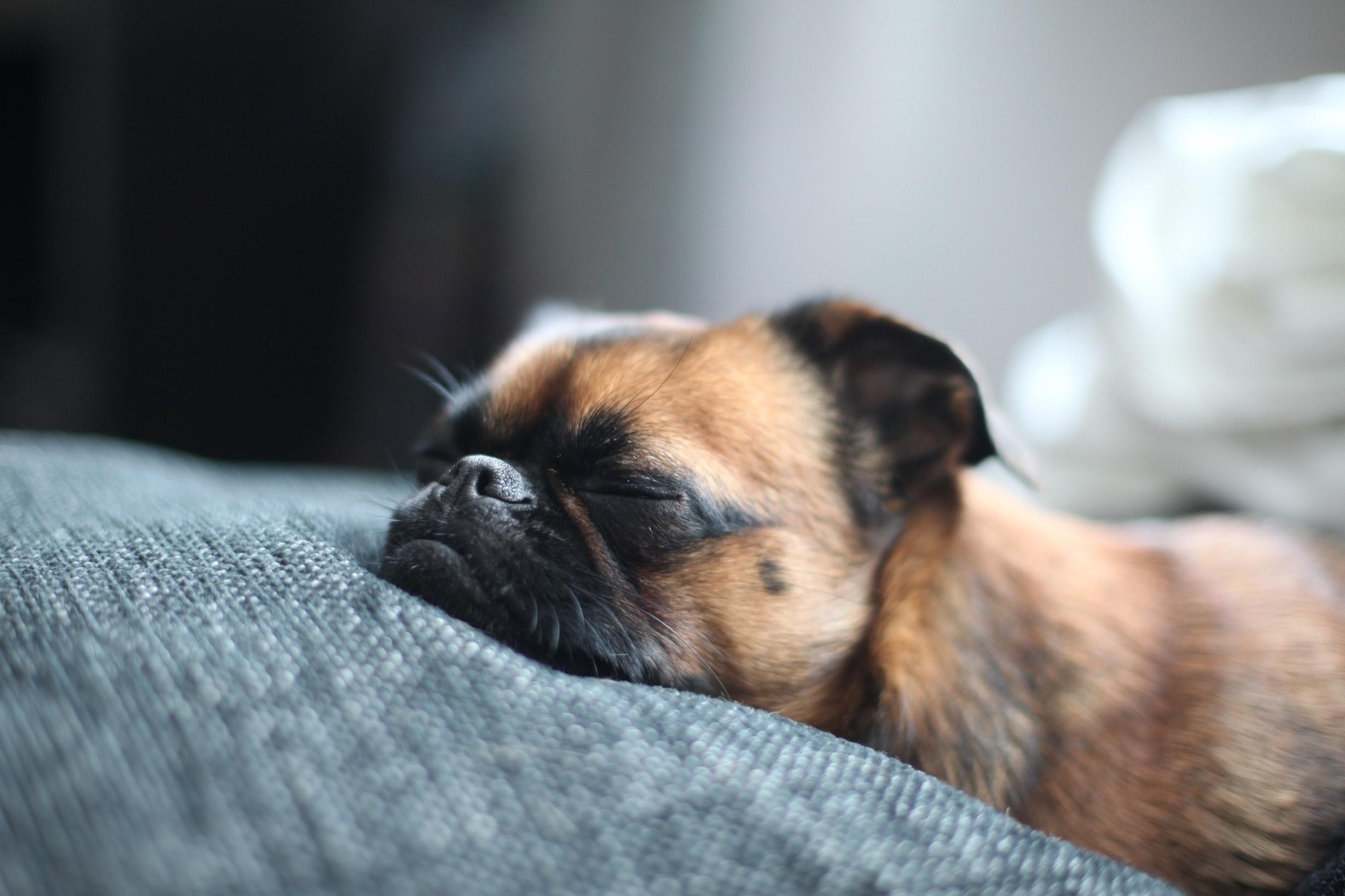Первый визит к ветеринару со щенком – насколько это важно!